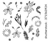 floral set in black and white....   Shutterstock .eps vector #371563924