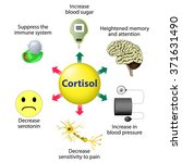 cortisol is released in... | Shutterstock .eps vector #371631490