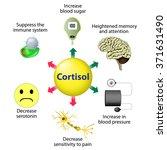 cortisol is released in... | Shutterstock .eps vector #371631490