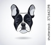 French Bulldog Head Isolated O...