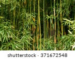 Green Bamboo Forest In Maui ...