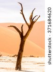 Small photo of Dead Acacia erioloba in the Dead Vlei (Dead Valley), Namibia Desert, Africa