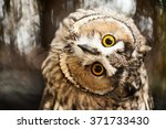 Big Yellow Eyed Eagle Owl...