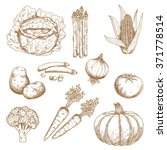 Sketches Of Farm Sweet Corn ...