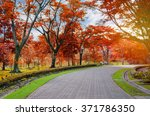 Colorful Of The Autumn In...