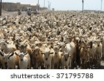 One Thousand And One Goats
