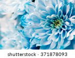 blue chrysanthemum flowers... | Shutterstock . vector #371878093