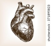 human heart sketch style ...   Shutterstock .eps vector #371895823