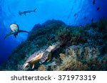 green sea turle in a reef with... | Shutterstock . vector #371973319