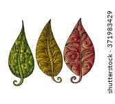 three leaves. doodle style. | Shutterstock .eps vector #371983429