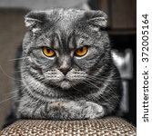 very serious and cute cat | Shutterstock . vector #372005164