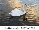Swan Pn Water