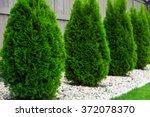 thujas   Shutterstock . vector #372078370