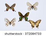 Collection Of Swallowtail...