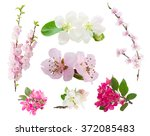 Stock photo spring flowers set fresh flowers tree twigs with blooming spring flowers isolated on white 372085483