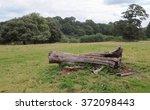 Fallen Tree Trunk In A Field...