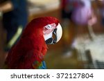 Red Macaw Parrot Close Eye At...