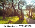 olives garden | Shutterstock . vector #372141538
