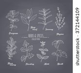 set of hand drawn spicy herbs... | Shutterstock .eps vector #372144109