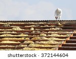 workman at rooftop of building... | Shutterstock . vector #372144604