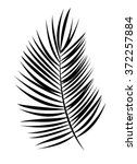 palm leaf vector background... | Shutterstock .eps vector #372257884
