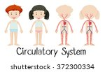 boy and girl with circulatory... | Shutterstock .eps vector #372300334
