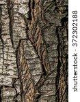Pear Tree Bark Photo Texture