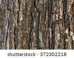 Tree Bark Background  Tree Bar...