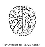 human brain for medical design  | Shutterstock .eps vector #372373564