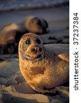 California Seal Resting On...