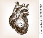 human heart sketch style raster ...   Shutterstock . vector #372382636