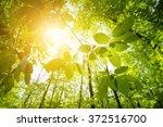 green leaves in sunshine | Shutterstock . vector #372516700