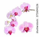 pink orchid on a white... | Shutterstock . vector #372604126