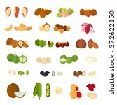 Collection Of Nuts Vector Flat...