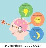 exposure to sunlight regulate... | Shutterstock .eps vector #372637219