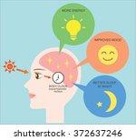 exposure to sunlight regulate... | Shutterstock .eps vector #372637246