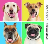 portraits of cute dogs on... | Shutterstock . vector #372712429