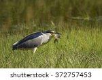 Night Heron. Green Nature...