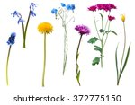Wild Flowers Isolated On White...