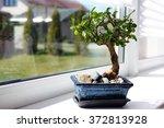 Little Bonsai Tree On The...