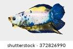 double tail fancy betta fish... | Shutterstock . vector #372826990