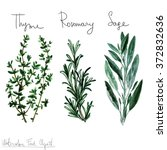 watercolor food clipart   herbs | Shutterstock . vector #372832636
