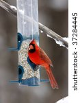 Male Northern Cardinal On A...