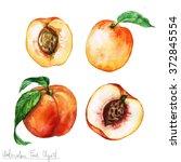 watercolor food clipart  ... | Shutterstock . vector #372845554