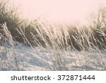 branch in hoar frost on cold... | Shutterstock . vector #372871444