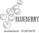 hand drawn sketch blueberry.... | Shutterstock .eps vector #372873670
