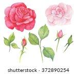 rose watercolor illustration | Shutterstock . vector #372890254