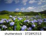 Flores  Hydrangea Wild Field ...