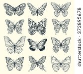 Stock vector set of illustrations illustration with butterflies freehand drawing 372895678