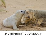 Grey Seal Mum And Pup On Beach.